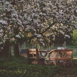 kwitnący maj