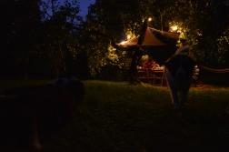 wieczory w sadzie