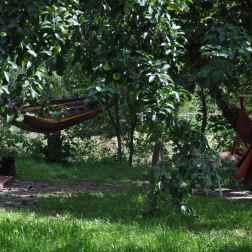 lato pod jabłonką
