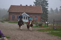 modre konie